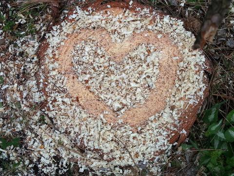 Stump of Love photographed by Ellen Nadarajah