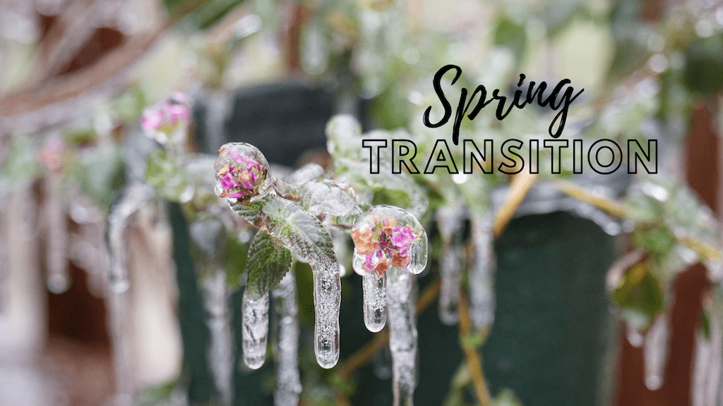 Transitional dressing while the weather sorts itself out by Colleen Kanna, Photo of frozen buds on branches by Thomas Park on Unsplash